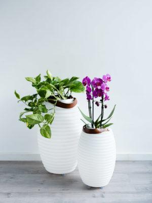 Nikki.Amsterdam_original_planten_florales_wohnen_@home_Blumentopf